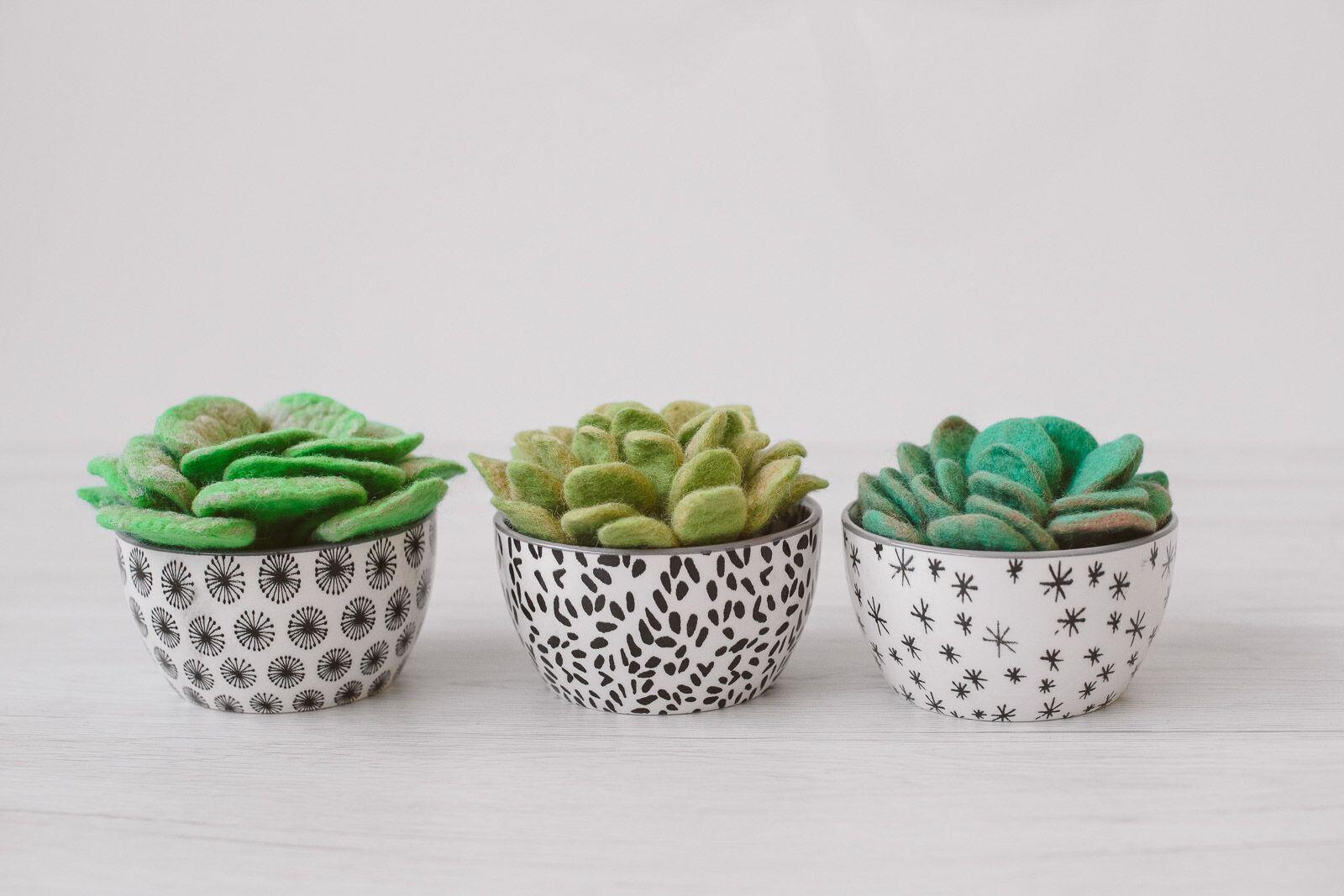 vasi con piante grasse di feltro