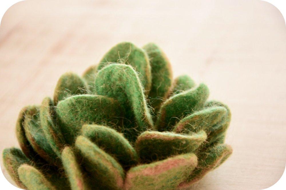piante grasse in feltro